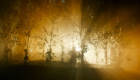 gorgeous-lighting-in-the-forest-of-the-night-doctor-who-back-when