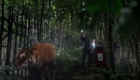 tiger-king-in-the-forest-of-the-night-doctor-who-back-when