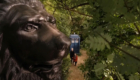 trafalgar-sqaure-lion-in-the-forest-of-the-night-doctor-who-back-when